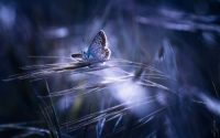 awesome butterfly hd wallpaper