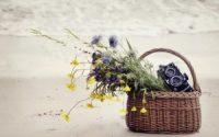basket flowers camera sand sea beach hd wallpaper