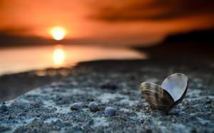 Beach-sunset-landscape-shells-hd-wallpaper