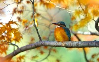 branch bird kingfisher hd wallpaper