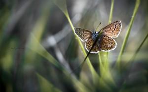 grass plants butterfly