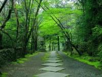 japan kyoto tour