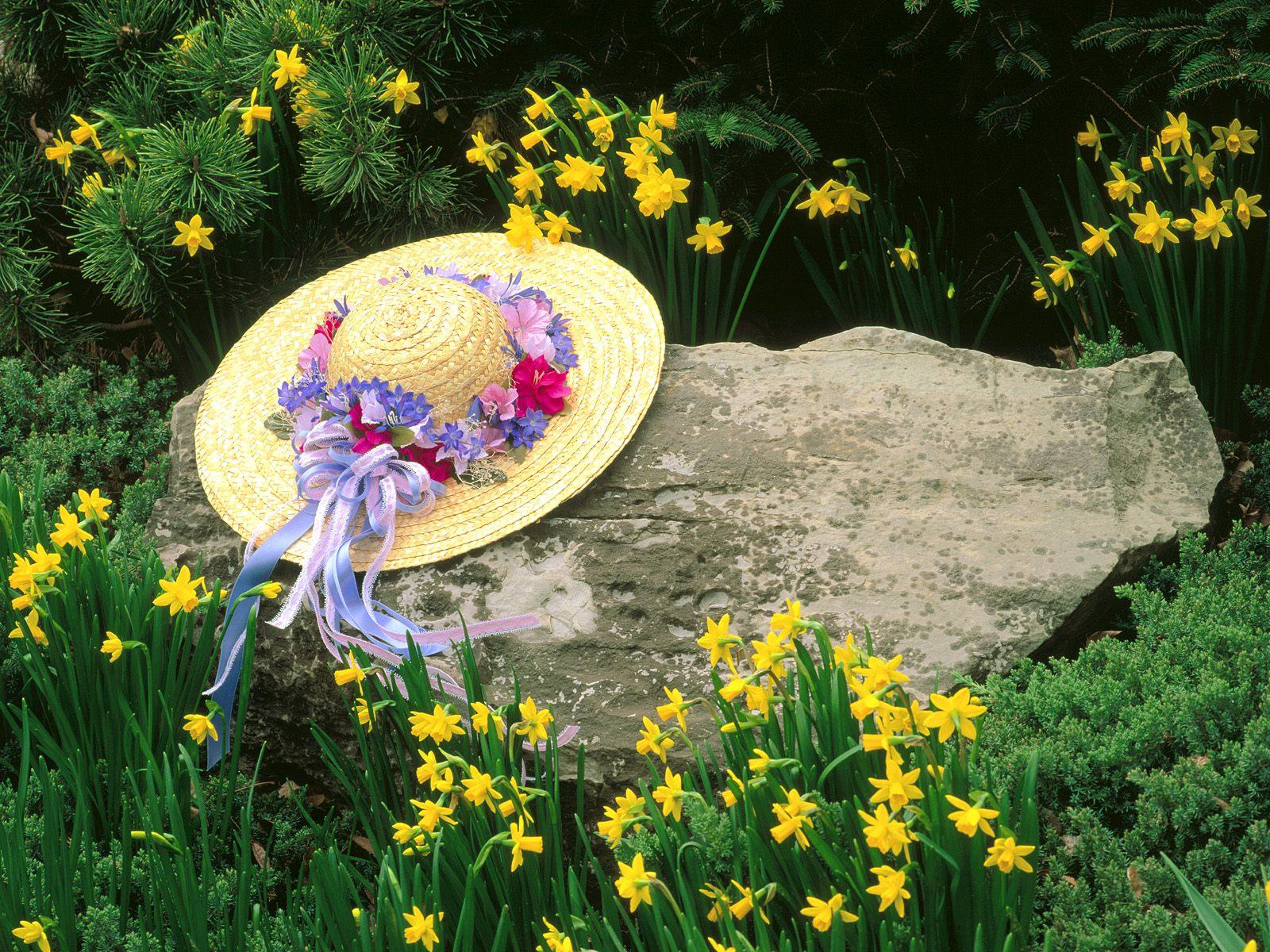 Among the Daffodils, Louisville, Kentucky