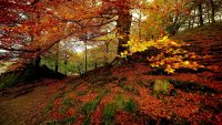 Autumnal forest wallpaper