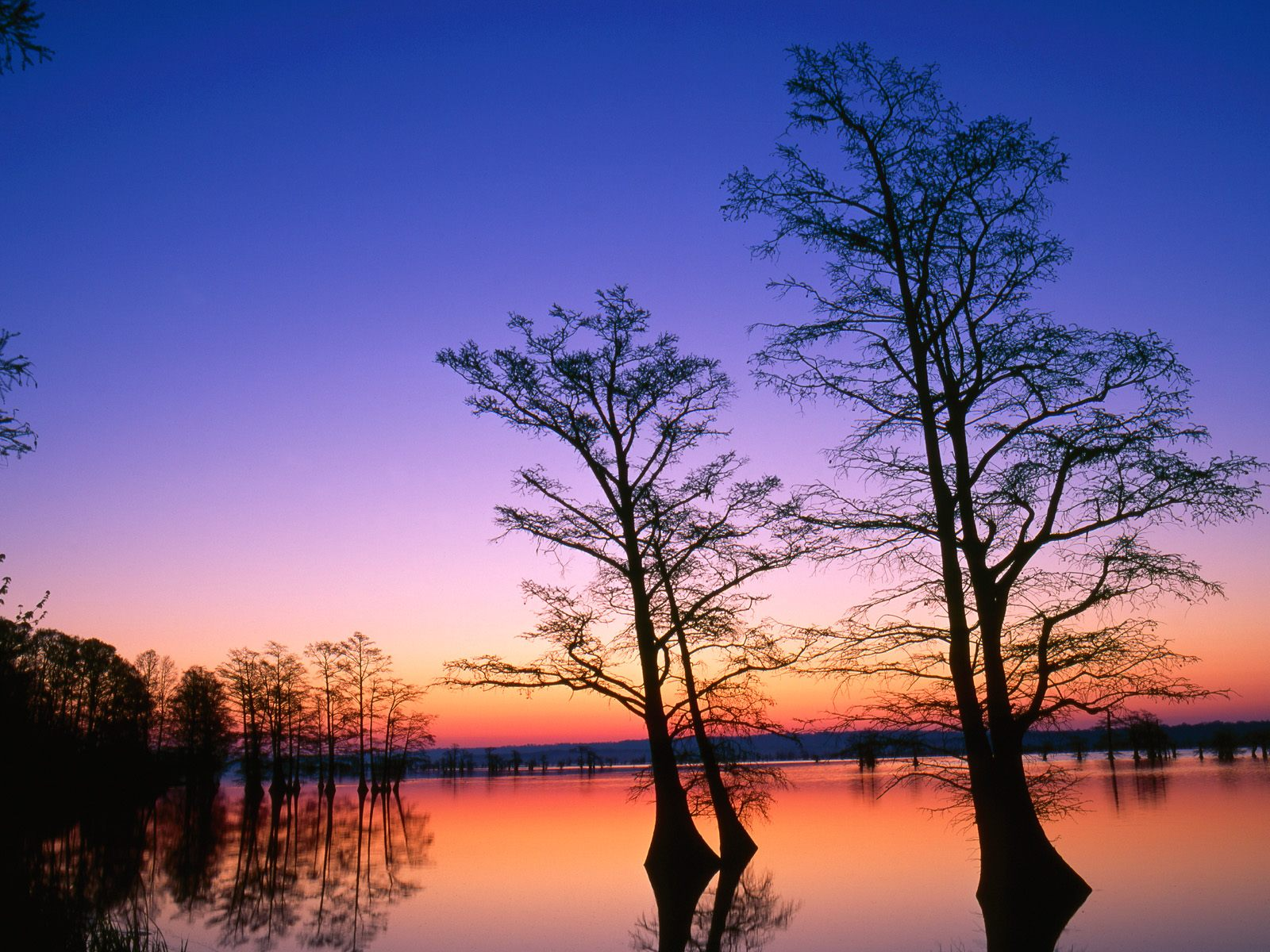 Bald Cypress Trees at Sunrise, Reelfoot National Wildlife Refuge,  Tennessee