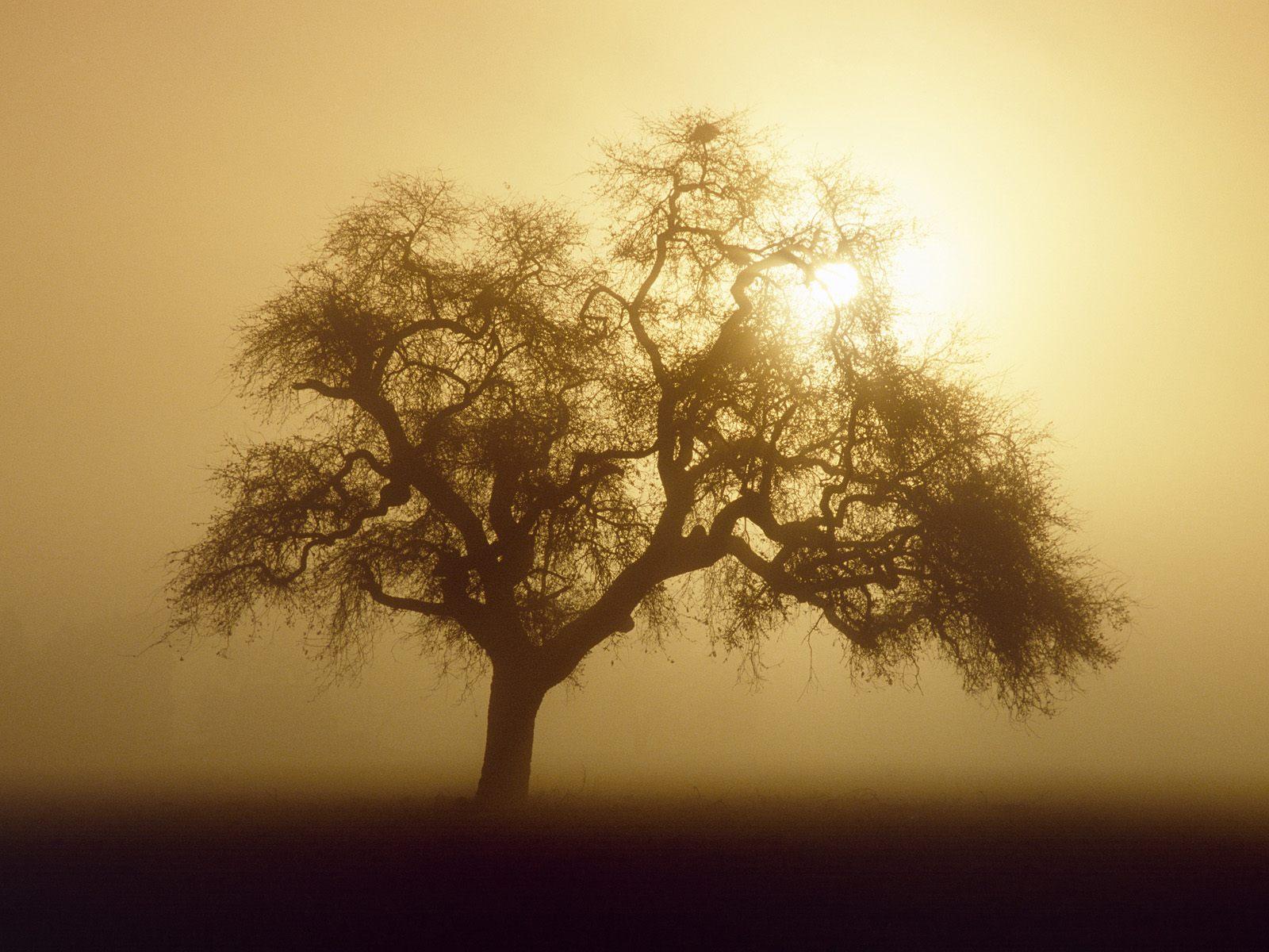 Central California Sunrise