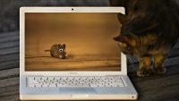 Computer cat wallpaper