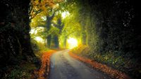 Country lane in autumn wallpaper