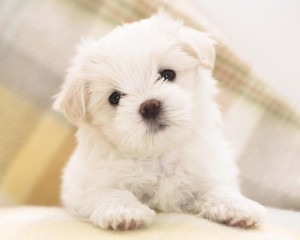 Cute Wallpaper teddybear