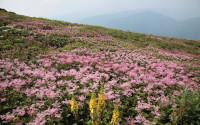 Flower hill wallpaper
