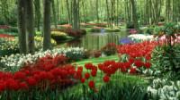 Flower park wallpaper