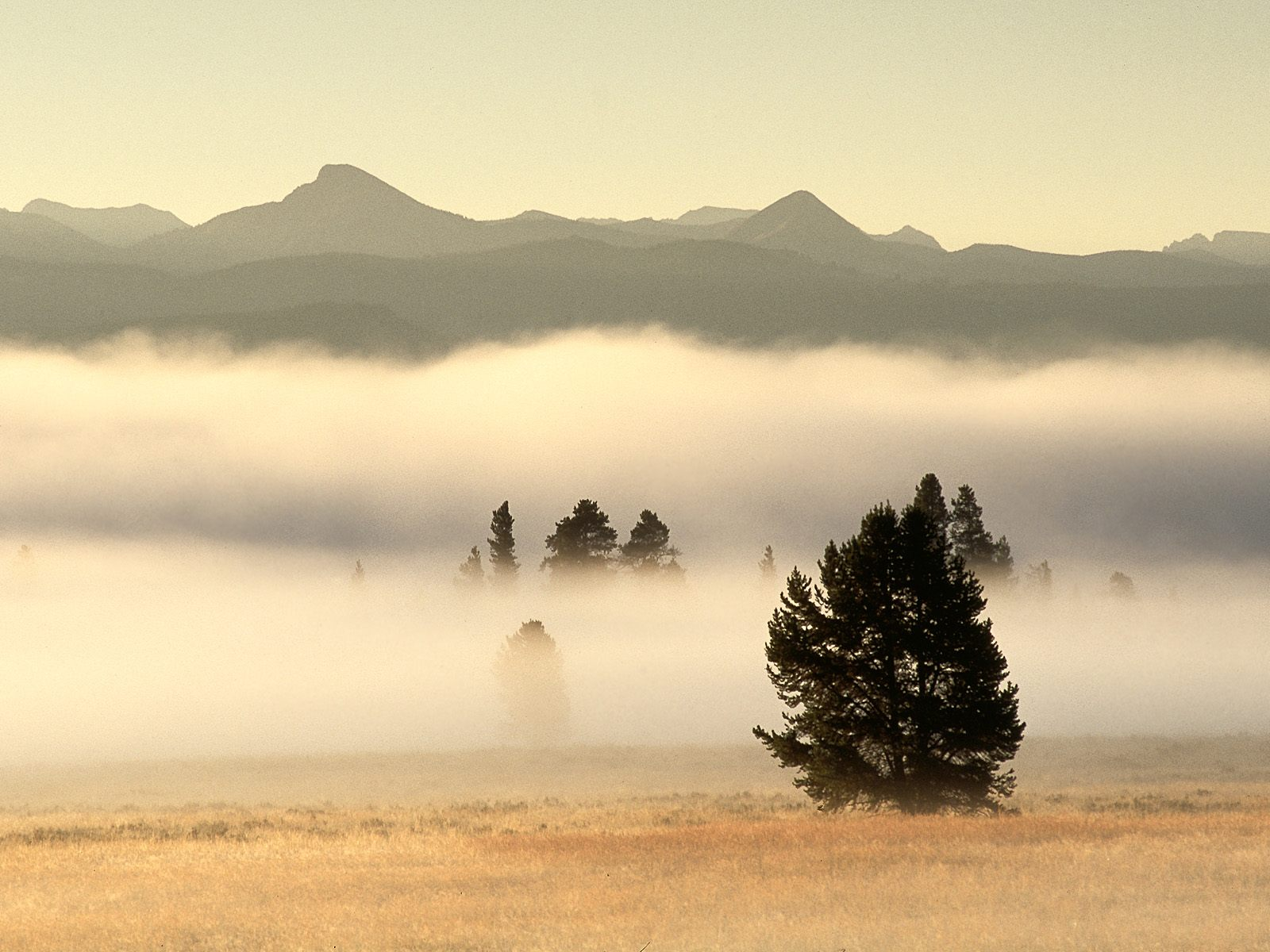 Fog at Sunrise, Pelican Valley, Yellowstone National Park, Wyoming