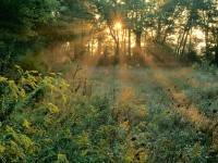 Sunbeams and Goldenrods, Edwin Warner Park, Nashville, Tennessee