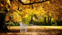Sunny autumn day wallpaper