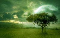 Tree art wallpaper