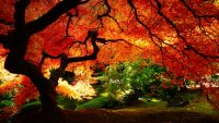 The red tree hd wallpapers
