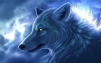 Arctic Wolf 11 Wallpaper