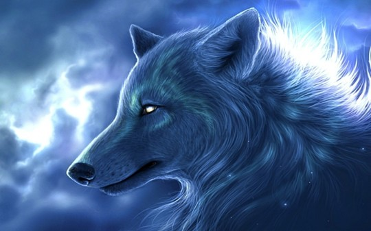 Arctic Wolf 11 Wallpaper Animal Wallpapers Free