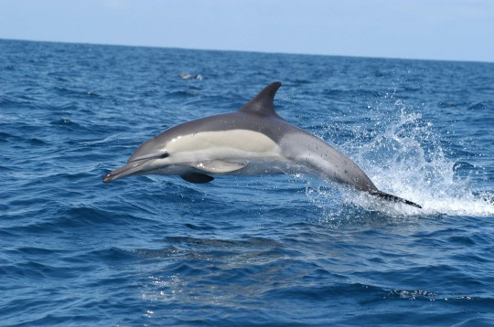 Dolphins 44 Wallpaper Animal Wallpapers Iphone 5