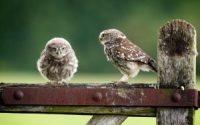 owls birds mood hd wallpaper