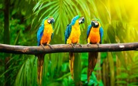 parrots branch jungle hd wallpaper