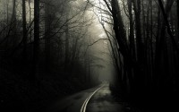 the dark forest road wallpaper