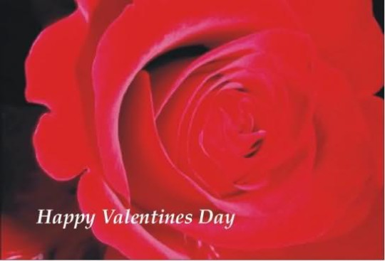 Valentine 2014 92 Wallpaper Love Wallpapers