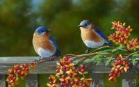 Beautiful Birds Wallpaper