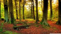 Beautiful forest autumn wallpaper