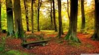 Beautiful forest autumn wallpaper