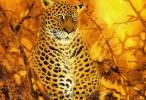 Fantasy Art Animal Leopard Wallpaper