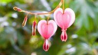 Flowers Heart Wallpaper