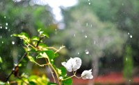 Raindrops nature wallpape