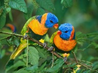 cute twin birds wallpaper