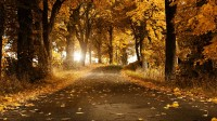 Autumn background yellow hd wallpapers