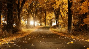 Autumn background yellow