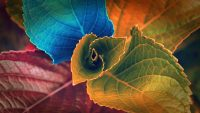 Color of leaves wallpaper