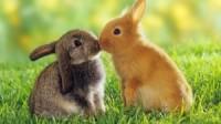 Cute animals wallpaper