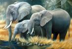 Elephants Wallpaper