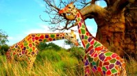 Giraffe Colored By Atillathe hungarian Wallpaper