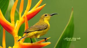 Gorgeous birds