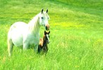 Horses and Ponies Wallpaper