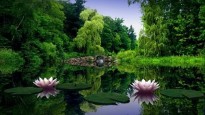 Lotus nature wallpaper