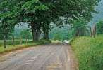 Nature HD cool road and tree wallpaper
