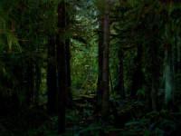 Nature HD dark wallpaper