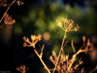 Nature HD flower wallpaper