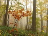 Nature HD tree wallpaper