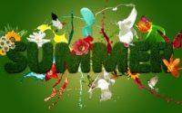 Summer cute flower wallpaper