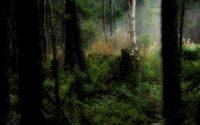 nature light&dark HD wallpaper